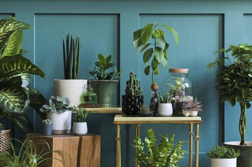 kamerplanten met ijsklontjes water geven waarom